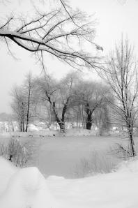 Der Teich in Schwarz-Weiß