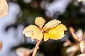 Makro-Blume_DSC4989