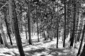 Wald-Schnee_DSC5067-brt