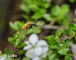 Insekt_DSC6533