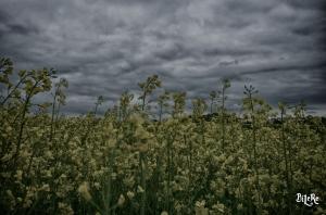 Landschaft_DSC7695_HDR