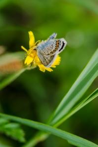 Schmetterling_DSC0718