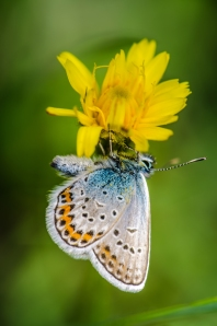 Schmetterling_DSC0723