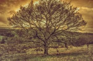 Baum_DSC9225