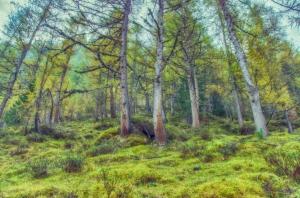 Wald2_DSC_0349