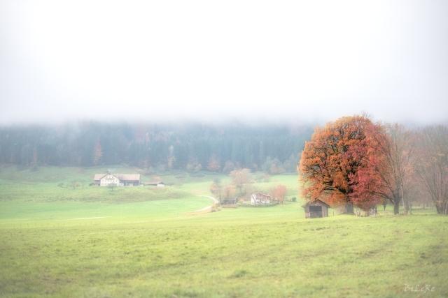 Fog_DSC9852