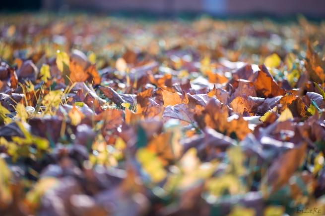 Herbstblätter_DSC9871