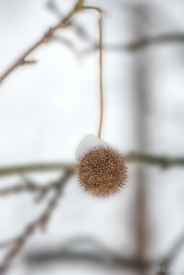Zweig am Baum_DSC7591
