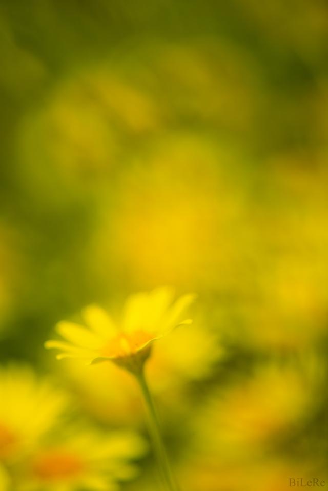 Feldblumen_DSC9805