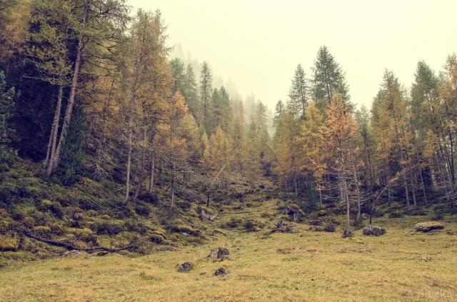 Wald-Kärnten