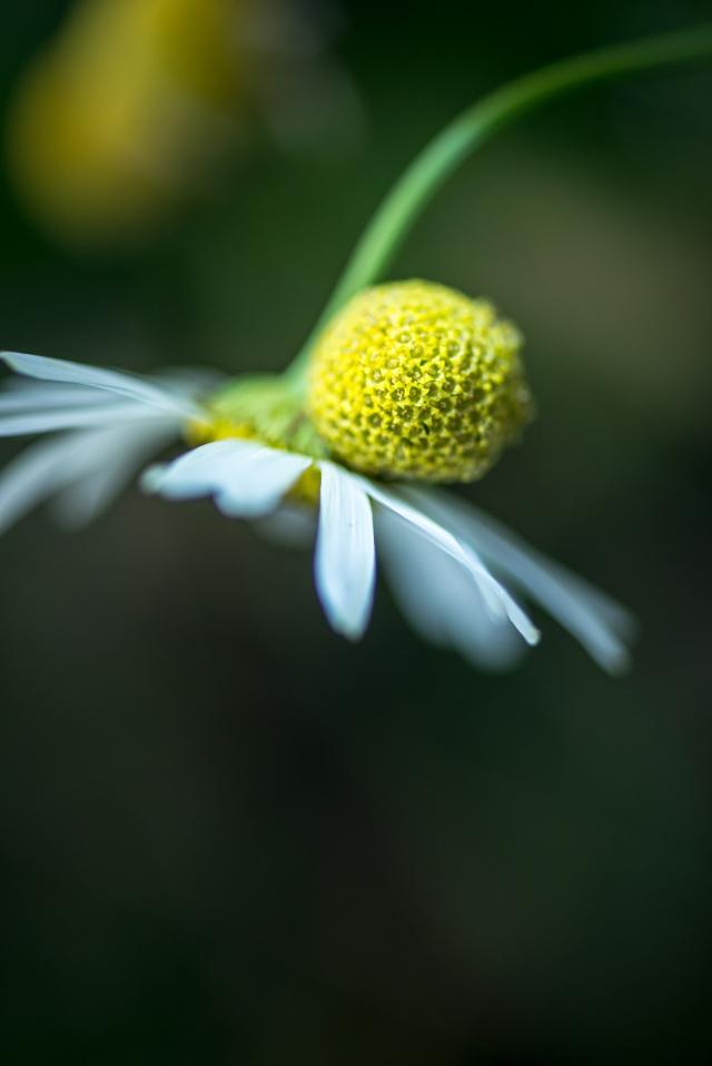 Blume-DSC_0395