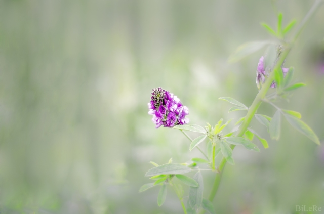 Blume_DSC1365