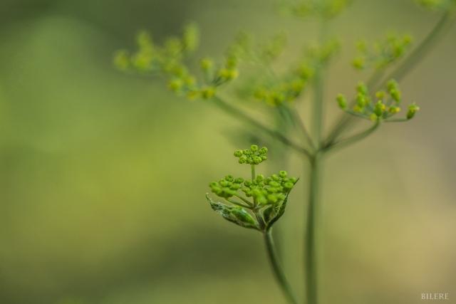 Grüne Blume_DSC0009