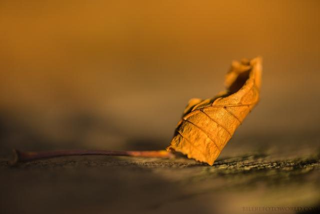 Kastanienblatt in Herbststimmung_DSC0801
