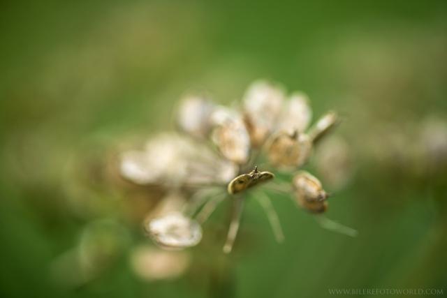 verschwommene Blume_DSC0424