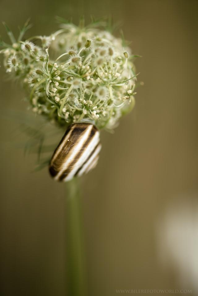Schnecke auf einer Blume_DSC0193