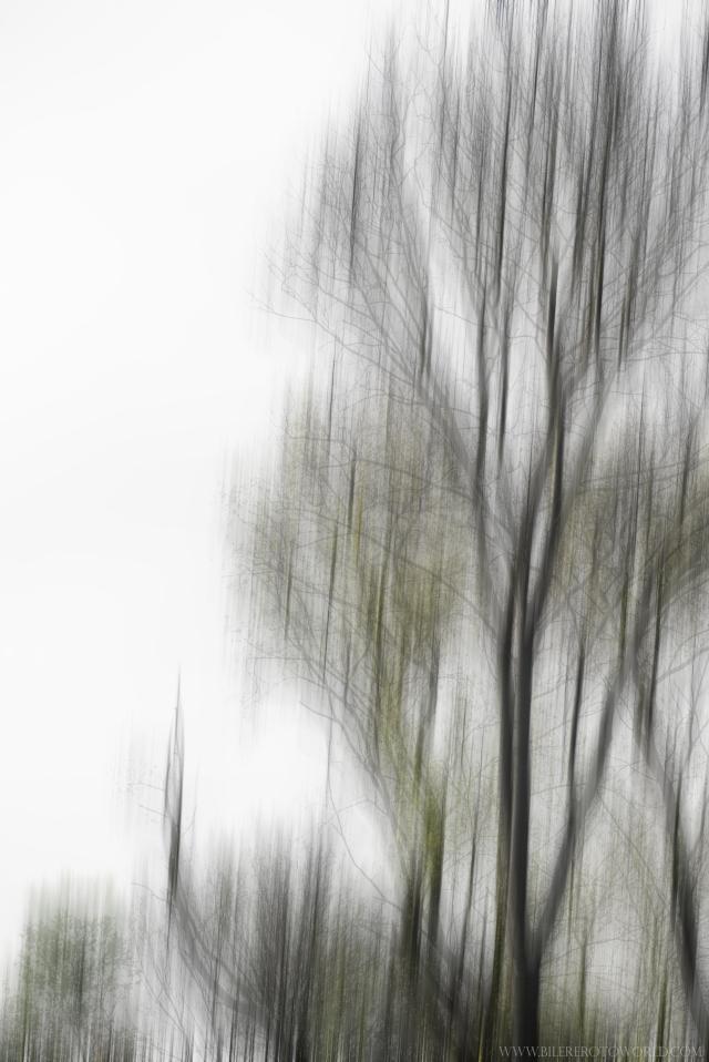 Bäume verwischt_DSC2010