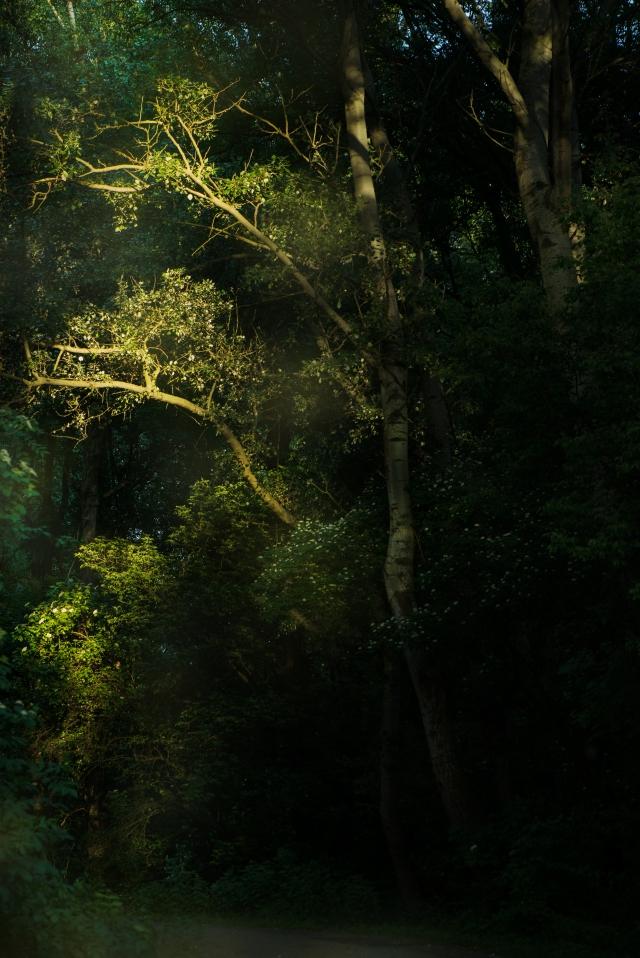 Licht und Schatten_DSC2170