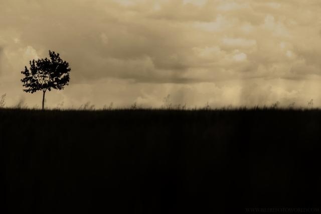Einsamer Baum-SW_DSC9800.jpg