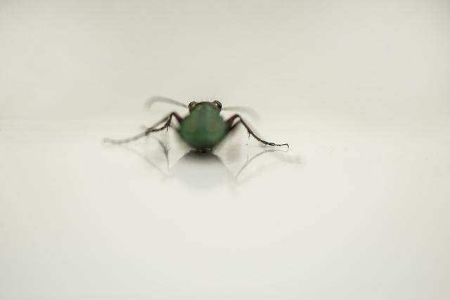 insekt_dsc4075